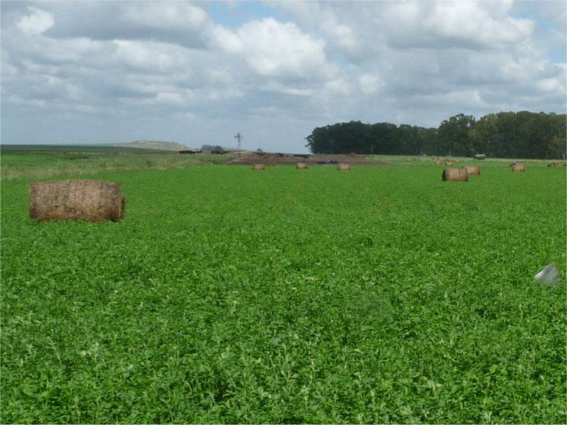 Rauch  -  La Ponderosa- Fosfoactiv sin fertilizantes fosforados